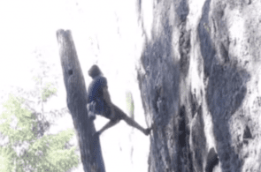 Weekend Whipper: Climber vs. Tree