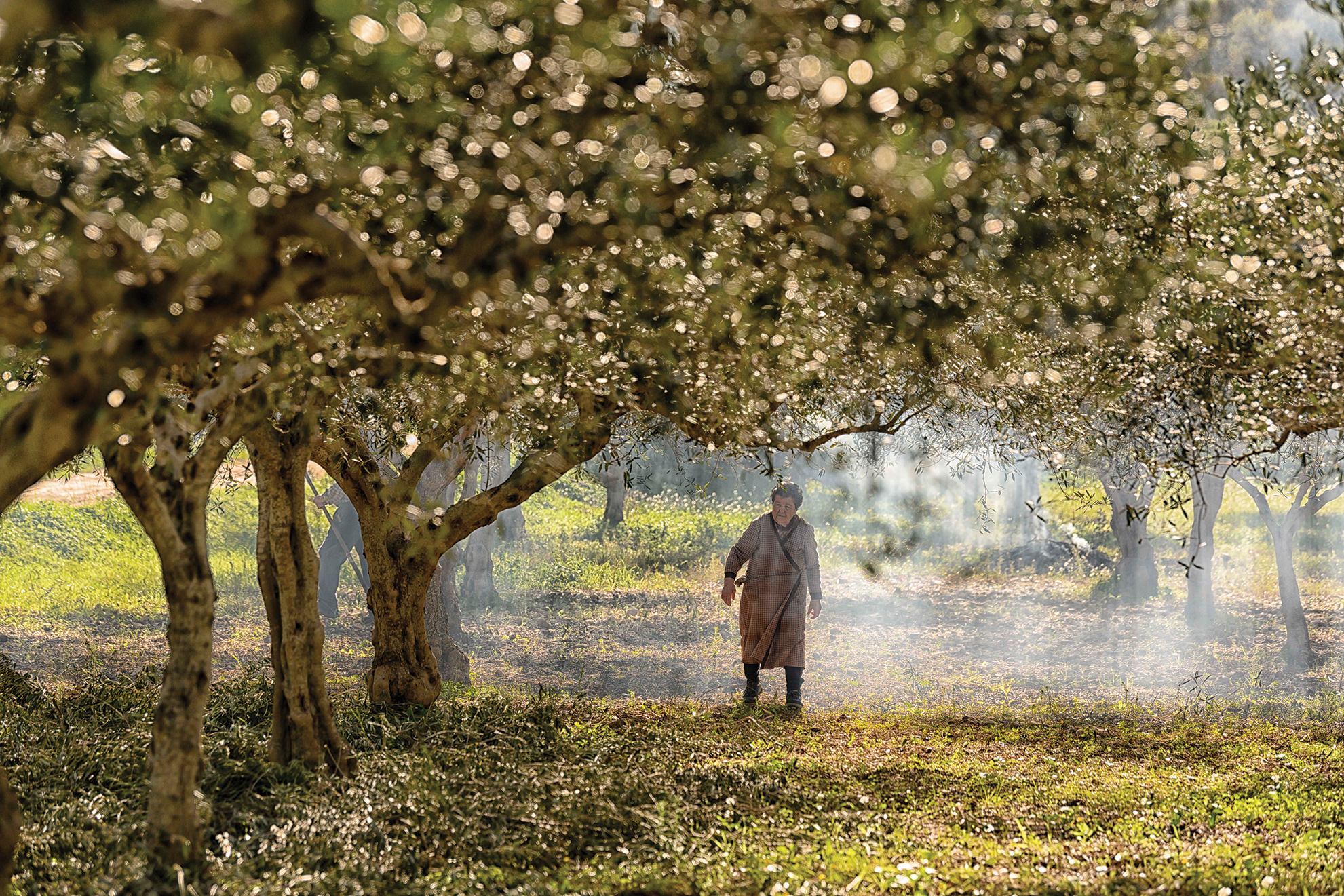 Locals harvesting olives, a common sight in San Vito. Photo: Jeff Rueppel.